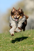 DOG 01 AC0034 01