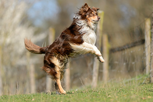 DOG 01 AC0035 01