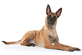 DOG 01 AC0042 01