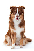DOG 01 AC0043 01