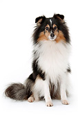 DOG 01 AC0045 01
