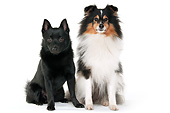 DOG 01 AC0046 01