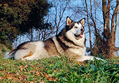 DOG 01 CB0002 01
