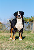 DOG 01 CB0005 01