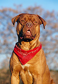 DOG 01 CB0009 01