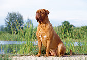 DOG 01 CB0012 01