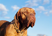 DOG 01 CB0014 01