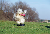 DOG 01 CB0021 01