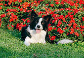 DOG 01 CB0028 01