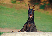 DOG 01 CB0030 01