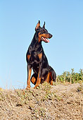 DOG 01 CB0033 01