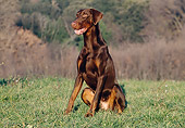 DOG 01 CB0037 01