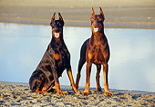 DOG 01 CB0041 01