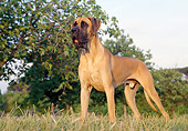DOG 01 CB0045 01