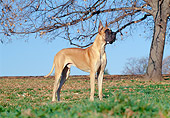 DOG 01 CB0051 01