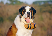 DOG 01 CB0057 01