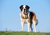 DOG 01 CB0058 01