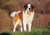 DOG 01 CB0059 01