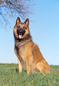 DOG 01 CB0062 01