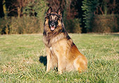 DOG 01 CB0063 01