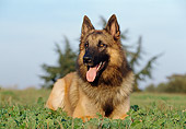 DOG 01 CB0064 01