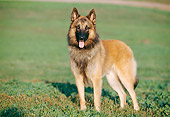 DOG 01 CB0065 01