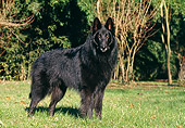 DOG 01 CB0066 01