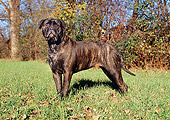 DOG 01 CB0068 01