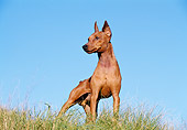 DOG 01 CB0081 01
