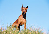 DOG 01 CB0082 01