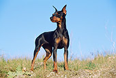 DOG 01 CB0083 01