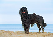 DOG 01 CB0085 01