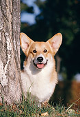 DOG 01 CB0088 01