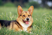 DOG 01 CB0093 01