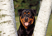 DOG 01 CB0096 01