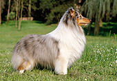 DOG 01 CB0101 01