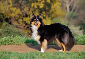 DOG 01 CB0102 01