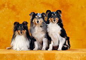 DOG 01 CB0105 01