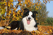 DOG 01 CB0115 01