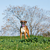DOG 01 CB0116 01