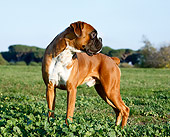 DOG 01 CB0117 01