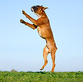 DOG 01 CB0118 01