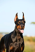DOG 01 CB0122 01