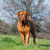 DOG 01 CB0123 01