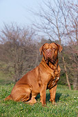 DOG 01 CB0125 01