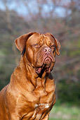 DOG 01 CB0126 01