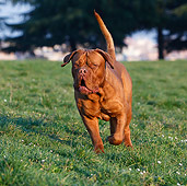 DOG 01 CB0129 01