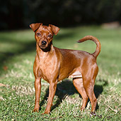 DOG 01 CB0132 01