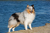 DOG 01 CB0135 01