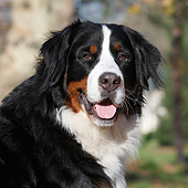 DOG 01 CB0136 01